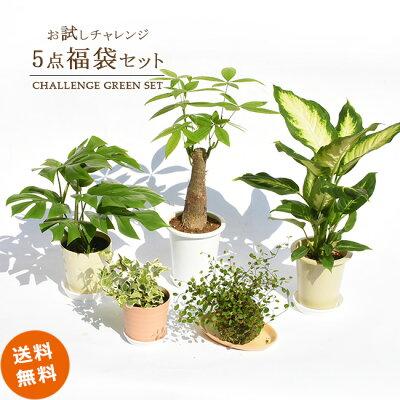 小さな観葉植物を3つ買いました。