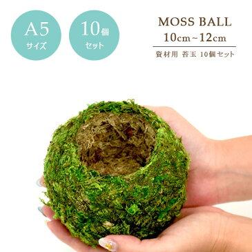 【10個セット】【資材苔玉A5サイズ】資材苔玉10〜12cmの苔玉 お徳用10個セット