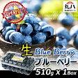 ★naturipe アメリカ産 生ブルーベリー 510g★ スーパーフード superfood blueberry blueberries ブルーベリー 健康食品 果物 目の疲れ 健康