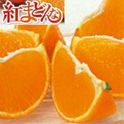 【送料無料】愛媛県産紅まどんなサイズL1.5kg(約6〜7玉)【ご家庭用】【お取り寄せ】【紅マドンナ】