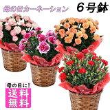 母の日 花 送料無料 ギフト 選べるお花♪ 鉢植え カーネーション 6号鉢 のし・包装不可