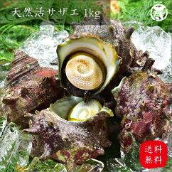 【送料無料】天然活サザエ500g三重県産刺身つぼ焼き贈答用贈り物結婚祝い誕生日BBQバーベキュー