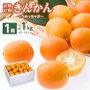 金柑 きんかん 完熟金柑 うめっちゃが 1箱 2Lサイズ(1