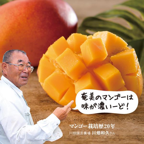 マンゴー 奄美の完熟!島マンゴー (約1kg)× 3箱セット お取り寄せ ギフト お中元 とろ~り 濃厚!
