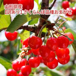 【訳あり】山形産さくらんぼ品種おまかせ(佐藤錦・紅秀峰ほか)1kg