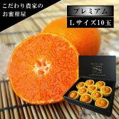 極上柑トロのお蜜柑「蜜ツ星プレミアム」黒の化粧箱Lサイズ初取り果実10玉入