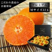 極上柑トロのお蜜柑「蜜ツ星プレミアム」黒の化粧箱Mサイズ初取り果実12玉入