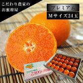 極上柑トロのお蜜柑「蜜ツ星プレミアム」白の化粧箱Mサイズ初取り果実24玉入