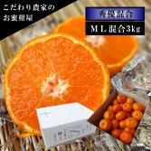 濃厚柑トロのお蜜柑「蜜ツ星(みつぼし)」白のギフト箱M〜Lサイズ混合秀優混合約3kg入