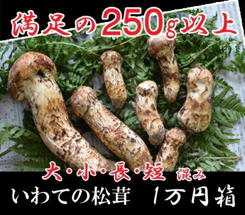 旬の国産松茸いわて産250g 大小開き混み(2-7本)10,000円 大きさ指定出来ません大、小、細、太、...