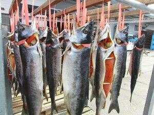 三陸産 秋サケ 昔ながらの新巻鮭 東北冬の名物!!【30%割クーポンで表示価格からさらに割引...