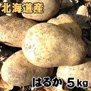 送料無料 越冬じゃがいも はるか 5kg 北海道産 ジャガイモ 産地直送