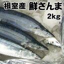 送料無料!根室産とろサンマ(約2kg 15〜17尾 1尾12