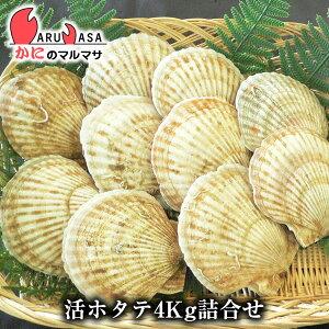 通販ギフトで大人気 北海道直送の活帆立貝 プリップリの活ほたて貝は貝柱が肉厚!焼き帆立 バタ...