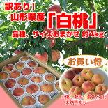 【訳あり】山形県産「白桃」品種、サイズおまかせ4kg※傷、変形、着色不良、未熟等あり【自家用】