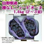 ニューピオーネ1.4kg(2-3房)