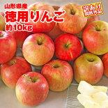 【訳アリ】山形県産りんご約10kgサイズ品種おまかせ規格外品※小傷色ムラ変形等あり【フジリンゴ】【林檎】