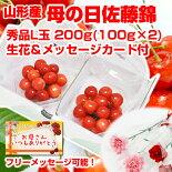 ハウス佐藤錦200g(100g×2)カーネーション付き商品画像