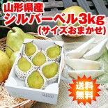 山形県産洋梨「シルバーベル」3kg(サイズおまかせ)