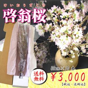 【送料無料】啓翁桜が一足早い春をお届け!御祝ごとが多いこの季節にギフト贈り物として最適!...