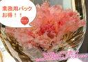 【カーネーションのお花が咲く工芸茶】250g約31個入り花茶 通販 販...
