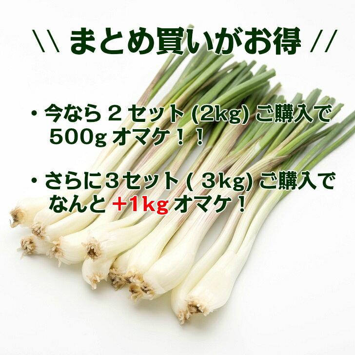 【送料無料】沖縄県産島らっきょうLサイズお得な1kgビールのお供に最高!!