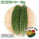 【送料無料】沖縄島野菜代表!ゴーヤー2kg 7〜10本【にがうり ゴーヤ 沖縄料