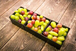 信州宝石箱~Grapes jewelry box's~