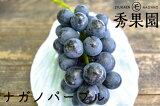 【ご家庭用】長野県産 ナガノパープル 2kg【訳あり】