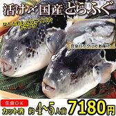 【カット済】活〆とらふぐ約1.2kgサイズとらふぐカット(1尾)ふぐ鍋約5人前てっちりてっさふぐセットフグ河豚フグ鍋セット
