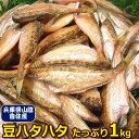 【税コミ価格】兵庫香住産 豆ハタハタ 1kg 【あす楽対応】<はたはた>【業務用】