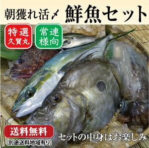 朝獲れ鮮魚通常セット★五島列島より活〆鮮魚を直送★
