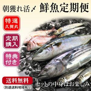 美味しい旬のお魚を毎月あなたの元へお届け![定期購入]1か月分の商品が無料!五島列島の季節の...