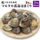 【送料無料】蓄養はまぐり 5年もの5cm〜6cmサイズ蛤(ハマグリ)3kg(60粒前後)...