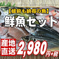 【福井のおさかな大集合♪板前も納得の鮮度と量です。】越前の旬の魚介類を厳選して詰め合わせ