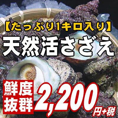 【磯の香り抜群!サイズが選べる♪】お刺身・壺焼き・BBQ!天然活さざえ1kg