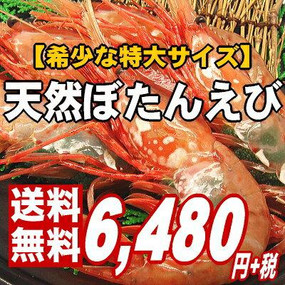 【海老の王様。鮨屋ご用達】ぷりぷり濃厚・甘み抜群の特大ボタンエビ1kg