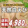 【富山湾の宝石】ほのかな塩味と濃厚な甘味のある極上白えび[送料無料]