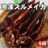【肝も食べれる鮮度の良さが自慢!】お刺身用するめいか5杯セット【あす楽_関東】【楽ギフ_のし】