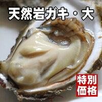 【まるまると肥えた身を厳選!】石川県能登半島産の天然岩ガキ