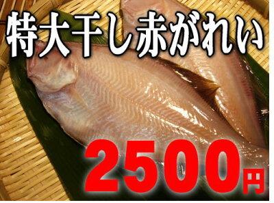 【福井で1番人気】ボリューム満点一夜干赤がれい5匹