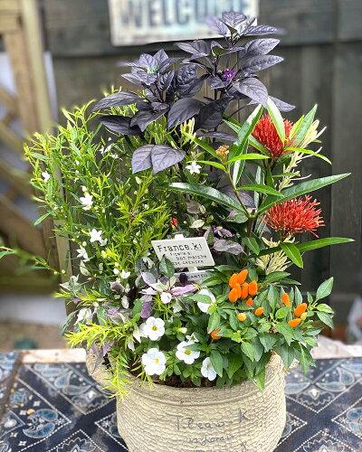 コンテナガーデン寄せ植え季節のおまかせテラコッタおまかせ寄せ植えテラコッタ冬仕様