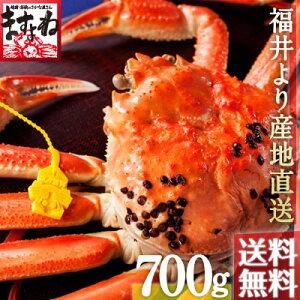 ●福井県の冬の味覚越前かにを、直接セリ落とし茹で上げる!産地直送の味。黄色のタグが本物の...