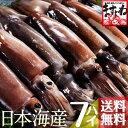 日本海産お刺身用するめいか(真イカ)中型サイズ×7ハイ(2kg前後)[送料無料]【レビュー高評価4.66!1,039件頂きました!】(いか/イカ/烏賊/刺身)[海鮮/魚介/海の幸/海鮮丼]【楽ギフ_のし】