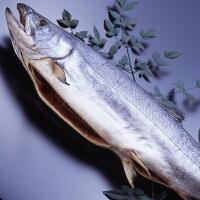 塩引き鮭1本物約3.4kg鮭ギフト塩引き鮭新潟村上