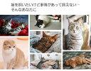 MeowEverミャウエバーグレー黒クッションぬいぐるみ猫わいいリアルゴロゴロ鳴く癒しネコのぬいぐるみ
