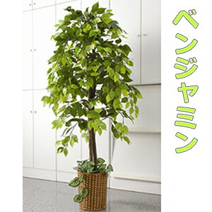 人工観葉植物 ベンジャミン 大型観葉植物 店舗用 リビングにもお勧め 観葉植物 今なら竹製鉢カバー付