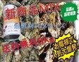 あす楽対応!送料無料の8kg 日本三景松島産 殻付き牡蠣殻付き 無選別4kg+SSサイズ4kg 加熱用