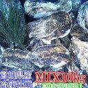 重量MIX10kg(約120粒)冷凍便送料無料! 宮城県産 殻付き牡蠣 殻付き 殻付 カキ 加熱用 一年子 松島牡蠣屋 無選別牡蠣
