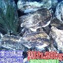 割れB品20kg(約240粒)冷凍便送料無料! 宮城県産 殻付き牡蠣 殻付き 殻付 カキ 加熱用 一年子 松島牡蠣屋 無選別牡蠣訳あり